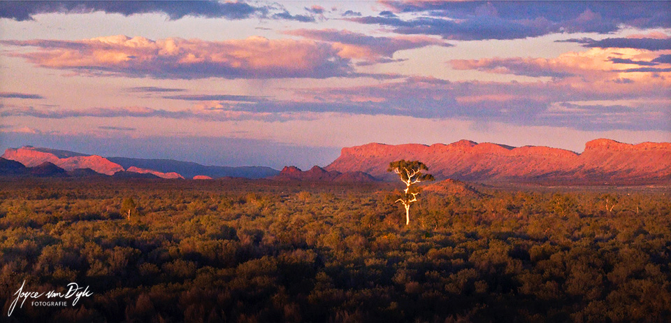 White-gumree-West-Mac-Donnell-Ranges