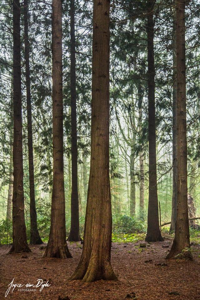 De-Maria-Peel-Bomen