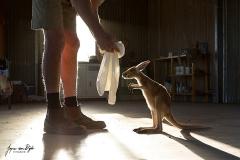 Kangaroo Dundee met Joey