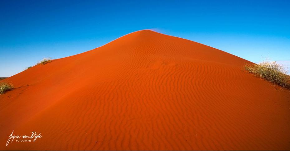 1_Simpsons-Desert