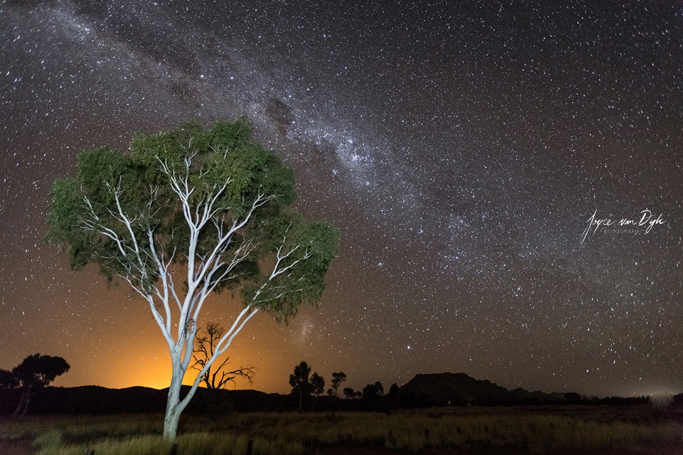 White-tree-night